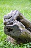 Oude stomp in het bos Stock Foto's