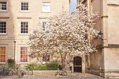 Oude straat in Oxford, Engeland, het UK Stock Afbeelding