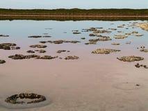 Oude Stromatolites, Westelijk Australië royalty-vrije stock fotografie