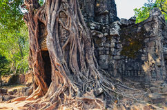 Oude tempelingang en oude boomwortels in Angkor Wat Royalty-vrije Stock Afbeeldingen