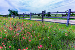 Oude Texas Wooden Fence en Wildflowers Stock Afbeelding
