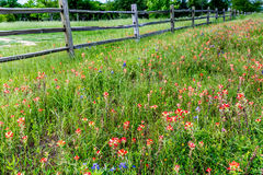 Oude Texas Wooden Fence en Wildflowers Royalty-vrije Stock Foto