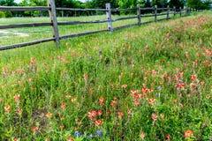 Oude Texas Wooden Fence en Wildflowers Royalty-vrije Stock Foto
