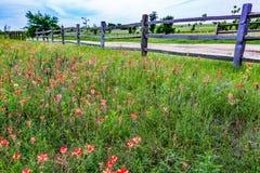 Oude Texas Wooden Fence en Wildflowers Royalty-vrije Stock Afbeelding