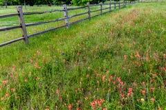 Oude Texas Wooden Fence en Wildflowers Stock Fotografie