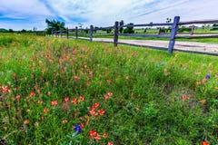 Oude Texas Wooden Fence en Wildflowers Stock Foto's