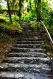 Oude trap in het bos royalty-vrije stock foto's