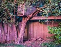 Oude treehouse en kabelschommeling tegen houten omheining in zonsonderganglicht Stock Foto's