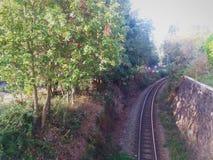 Oude treinlijn in het midden van de vegetatie stock foto's