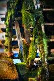 Oude turbinepers met mos bij het dorp van Oshino Hakkai dichtbij Fuji moutain royalty-vrije stock afbeeldingen