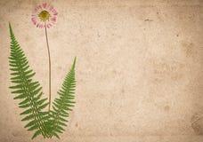 Oude uitstekende document textuur met droge varenbladeren en bloem stock illustratie