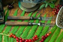 Oude uitstekende vorken, de bessenbessen van het varenblad Royalty-vrije Stock Afbeeldingen