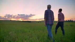 Oude vader die met zijn volwassen zoon op tarwegebied en het letten op mooie zonsondergang, verbazende aard lopen stock footage