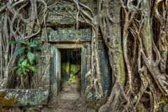 Oude van de steendeur en boom wortels, de tempel van Ta Prohm, Angkor, Camb stock foto
