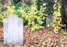 Oude Vergeten Graf en Ivy Graveyard stock afbeelding