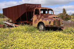 Oude verlaten Austin-vrachtwagen in Westelijk Australië Royalty-vrije Stock Afbeelding