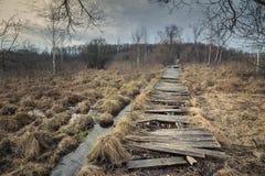 oude verlaten houten weg door moerasland royalty-vrije stock fotografie