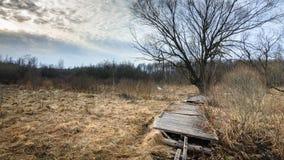 oude verlaten houten weg door moerasland royalty-vrije stock afbeeldingen