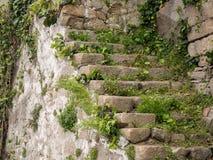 Oude, versleten steenstappen die in Porto, Portugal met installaties in barsten groeien royalty-vrije stock fotografie