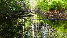 Oude vijver in het bos Stock Foto