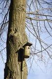 Oude vogel nestelen-doos op boom Stock Afbeeldingen
