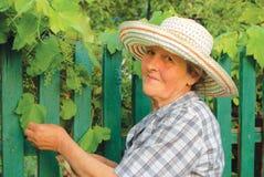 Oude vrouw die in de tuin werkt stock foto's
