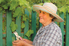 Oude vrouw die in de tuin werkt Stock Afbeeldingen