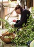 Oude vrouw het plukken haagdoornbloemen Stock Fotografie