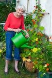 Oude Vrouw het Water geven Bloeminstallaties bij de Tuin Royalty-vrije Stock Afbeelding
