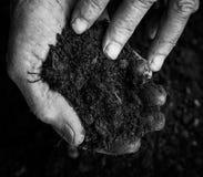 Oude vrouwenhanden die verse grond houden Symbool van de Lente Royalty-vrije Stock Foto