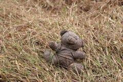 Oude vuile die teddybeer op de droge grasgrond wordt veronachtzaamd royalty-vrije stock afbeeldingen