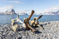 Oude walvisbeenderen op de kust van Spitsbergen, Noordpool Stock Foto