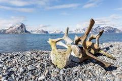 Oude walvisbeenderen op de kust van Spitsbergen, Noordpool Royalty-vrije Stock Foto
