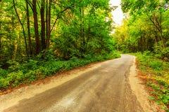 Oude weg in bos Royalty-vrije Stock Foto's