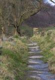 Oude weg door de gebieden Royalty-vrije Stock Fotografie