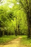 Oude weg in het bos Royalty-vrije Stock Foto