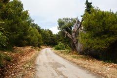 Oude weg in het groene bos van de aardpijnboom en ruïnes van boom in bergen op het eiland in Middellandse Zee stock afbeeldingen