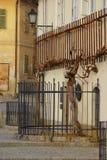 Oude Wijnstok op Geleend in Maribor Stock Afbeeldingen