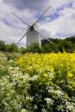 Oude Windmolen met Oliezaad en wilde bloemen stock afbeeldingen