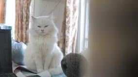 Oude witte pluizig slaapt de zitting van het kattenportret op de lijst oude mooie witte kattenzitting door het venster van stock videobeelden