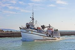 Oude, witte visserijtreiler die haven ingaan stock foto