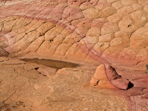 Oude Zeebedding in Arizona Royalty-vrije Stock Afbeeldingen