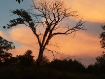 Oude zonsondergang Stock Foto