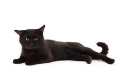 Oude zwarte kat Stock Foto's