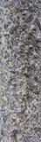 Oude zwarte witte die textuur van steen wordt gemaakt Royalty-vrije Stock Foto