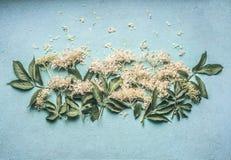 Oudere bloemen met bladeren op blauwe lijstachtergrond royalty-vrije stock foto