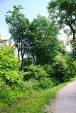 Oudere boom in Vermaak en Recreatiecentrum Belmontas Stock Fotografie