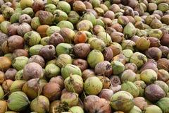 Oudere kokosnotenachtergrond in Koh Samui-eiland Stock Afbeelding