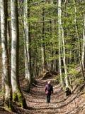 Oudere mens die tussen lange bomen in een bos lopen royalty-vrije stock foto