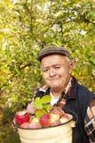 oudere mens geplukte appelen Stock Afbeeldingen